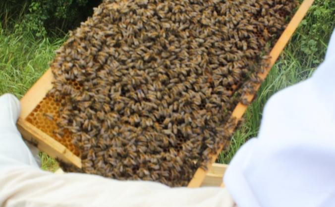 fields bee emporium