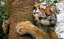 Crowdfund Dartmoor Zoo