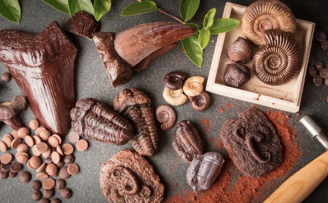 The Edible Museum Chocolate Studio