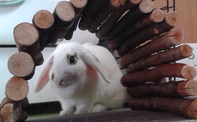 Funds for Flossy, rescue Bunny