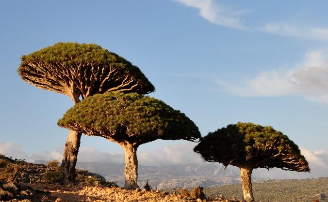 Training and children's education - Socotra, Yemen