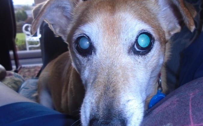 Declan is nearly blind. Please help.