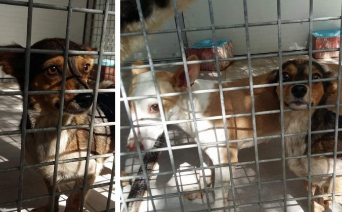 Save These Two Little Dogs - Help Us To Help Them!