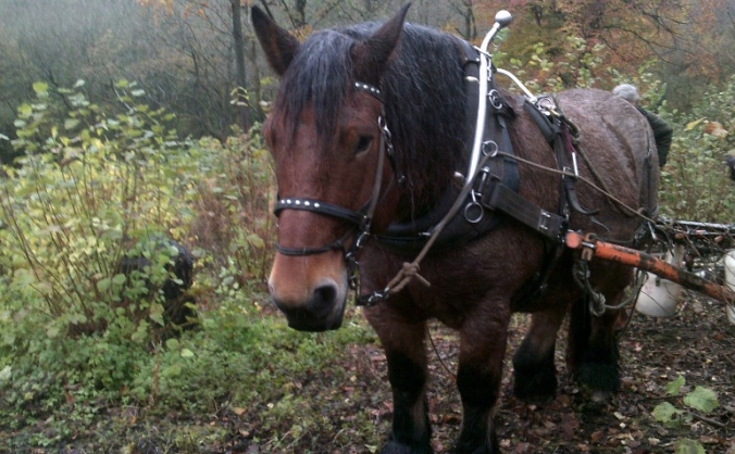 working woodland horse