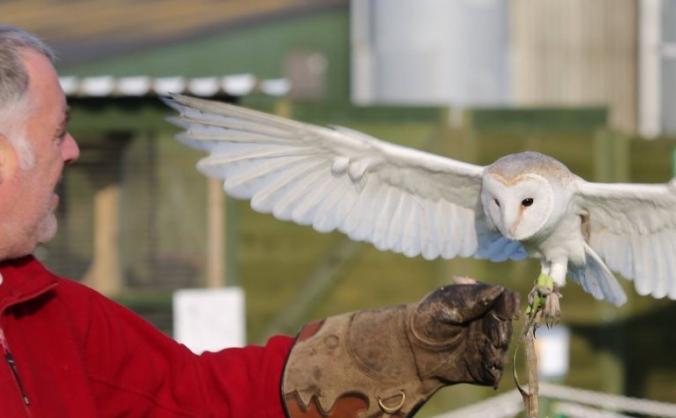 The Owl Rescue Centre