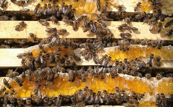 Beeshack investing in our honey bees