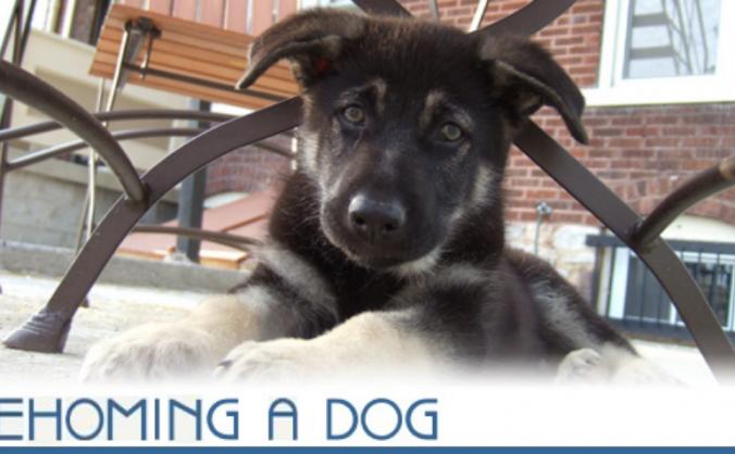 Help fund for dog Shelter