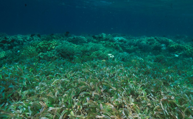 Seagrass Ecology research in Indonesia