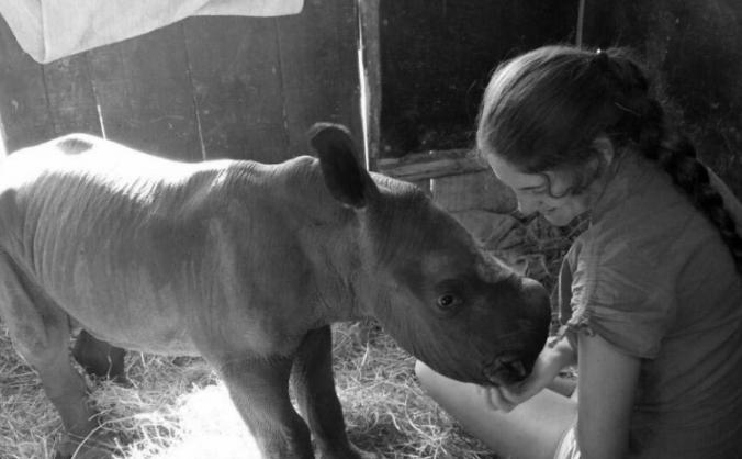 Aussie: Rhino Care in Africa