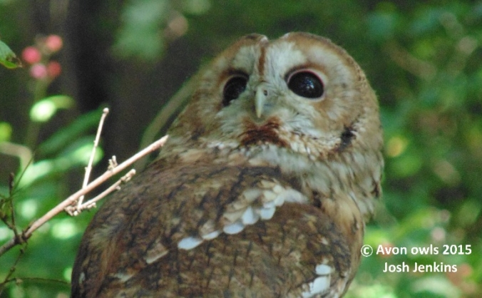Give a hoot, give a home