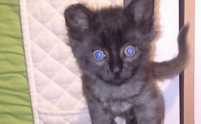 Kittens veterinary treatment