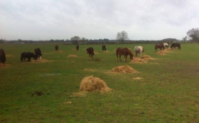 Essex Horse & Donkey Sanctuary