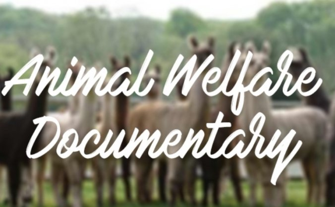 Animal Welfare Documentary