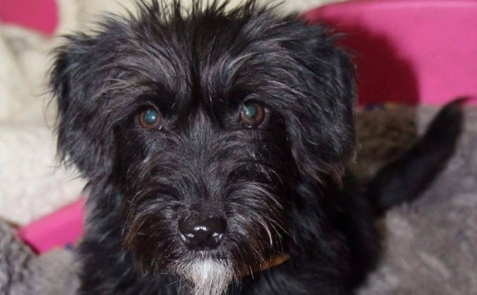 Tansporting special needs dog 'Mouse' from Serbia