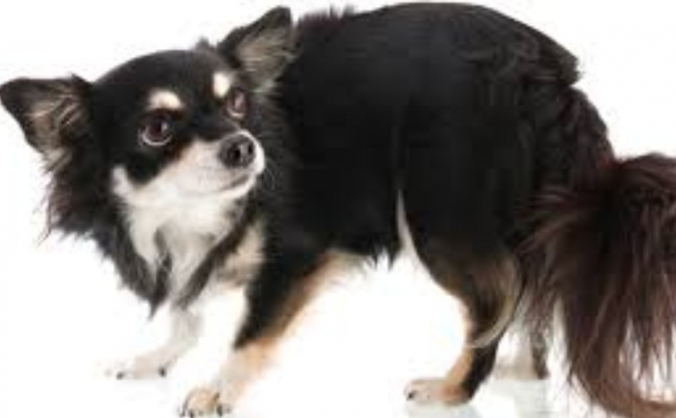 Dog Grooming for Nervous Dogs
