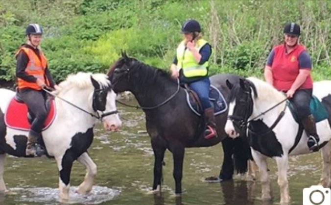 Peak Trails Pony Trekking
