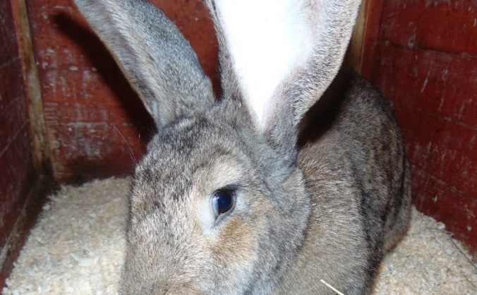 tameside rabbit and guinea pig rescue