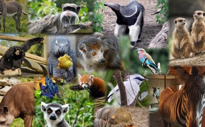 Crowdfund Fife Zoo