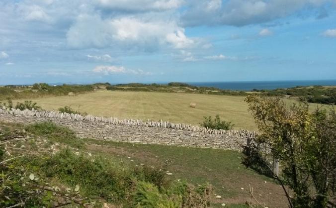 Fossil Free Dorset