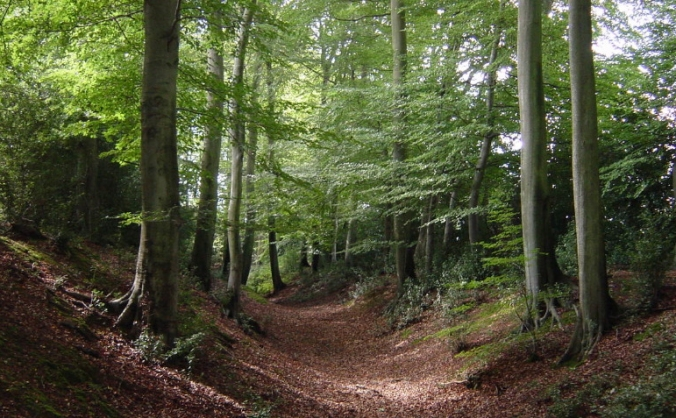 Ancient Woodland Protection