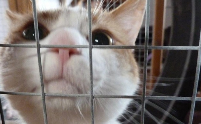 Christmas Dinner for Cats in Care