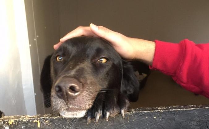 Uk Romanian Dog Rescue