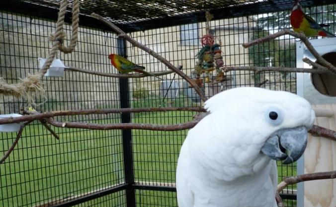 Outdoor aviaries