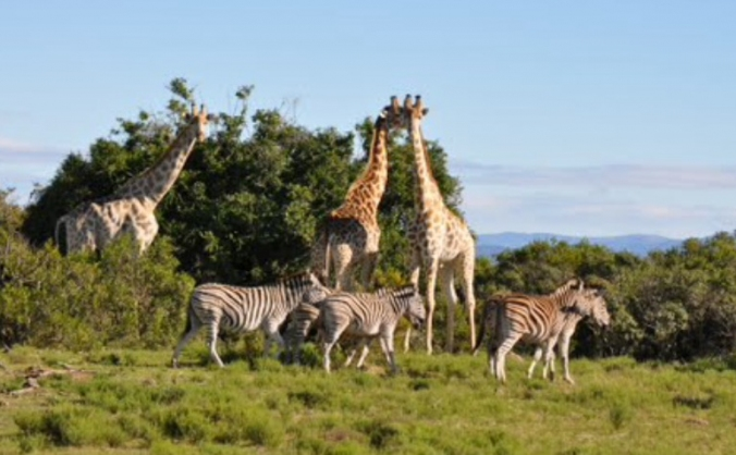 South Africa animal conservation program