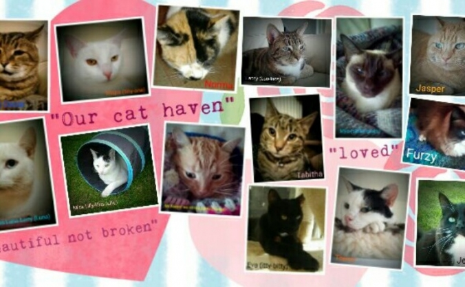 OUR CAT HAVEN vets fees help !!