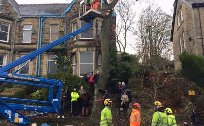 Street Trees Legal Fund 2 (Rustlings Rd)