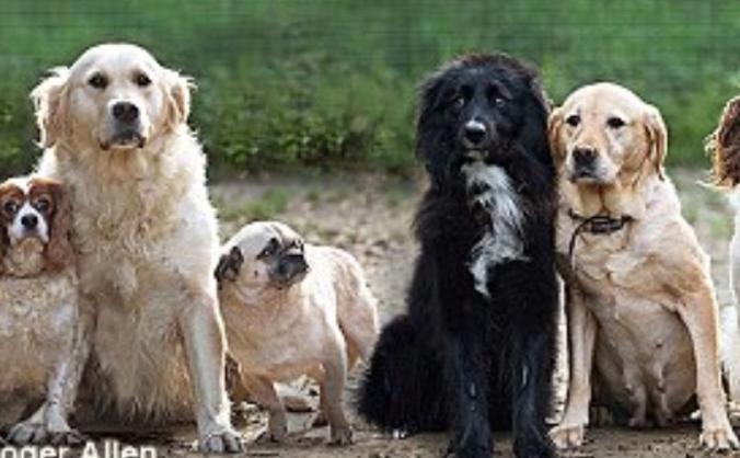 Many Tears Animal Rescue Fundraiser