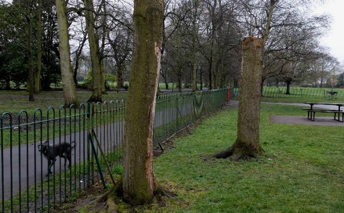 Longford Park tree carvings