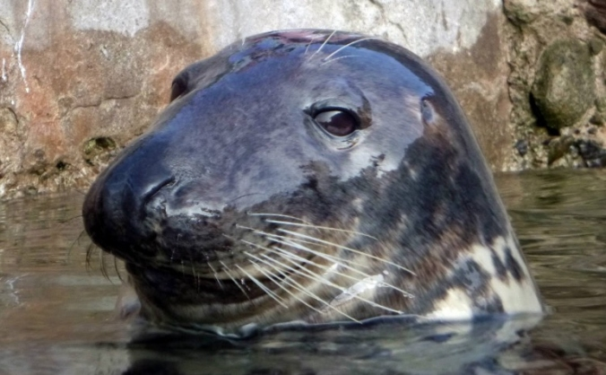 Brixham Marine Conservation Project