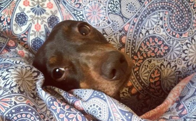 Molly the Dachshund's life saving back operation