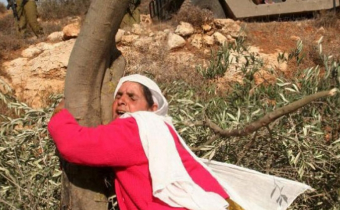 Belonging to The Land: Chai For All  in Palestine