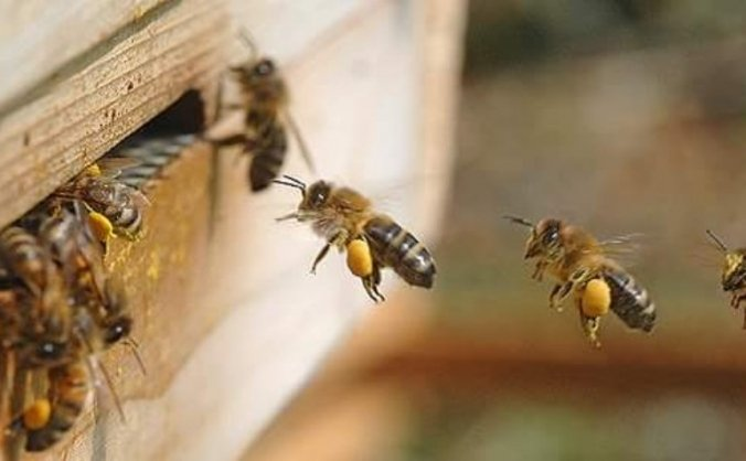 Urban Honey Bee And Pollinating Insect Garden