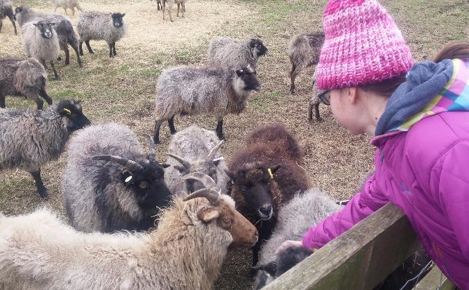 Lauriston Farm Social Farming Initiative