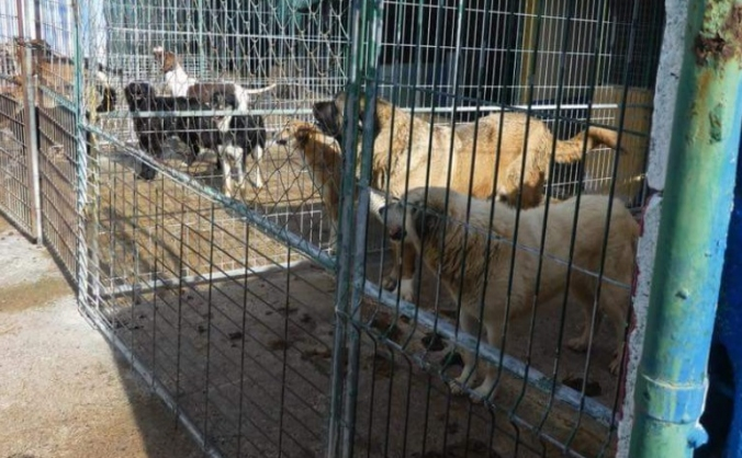 Urgent help for Veterinary care for abandoned dogs