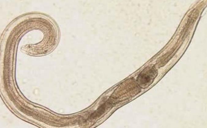 Parasitology masterclass in Sri Lanka.