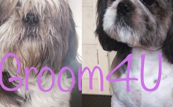 Groomer 4 every walk of life (Groom4U)