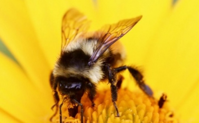 Save the British Bees!  Cider & Honey Education