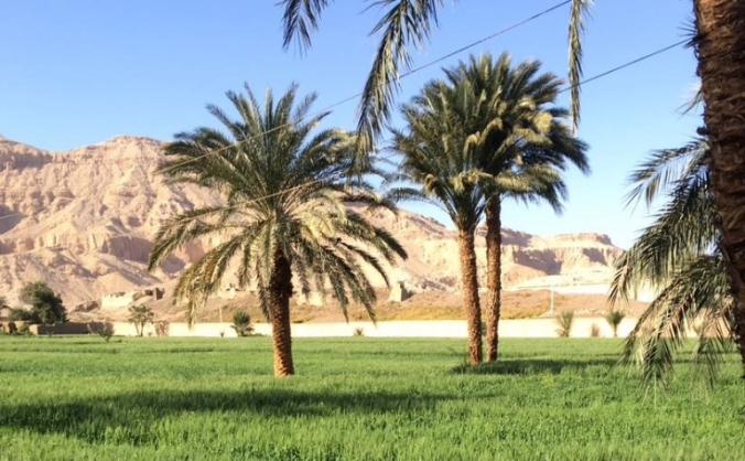 Habu view