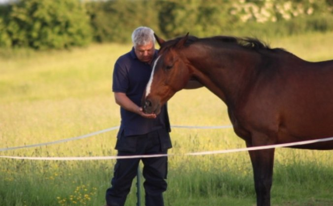 Save The Way of the Horse Therapy Centre