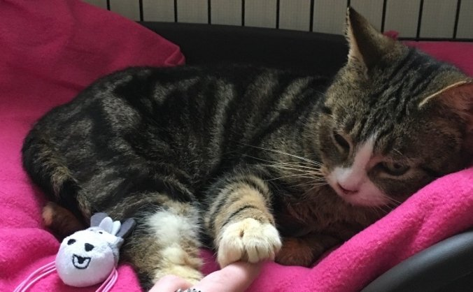Appeal for rescue cats  Paisley & Paiton