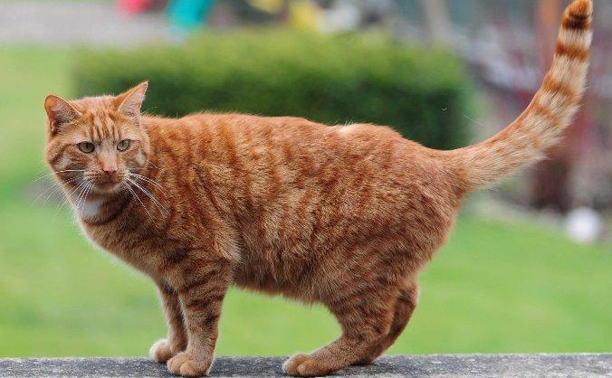 Please HELP Bernard the Cat!