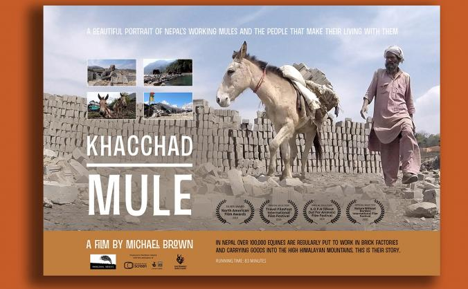 Kotchad - a mule's life in Nepal