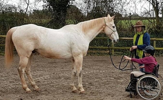 New Life Horse Care Sanctuary