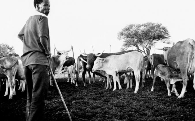 Ju 'hoansi to use smartphones for conservation