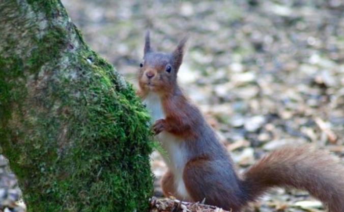 Great British Wildlife Encyclopaedia