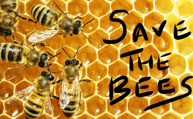 Save the honey bees! Start up beekeeping project.